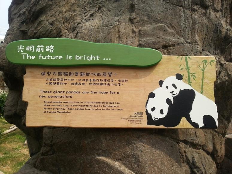 12ocean-park-hong-kong-panda