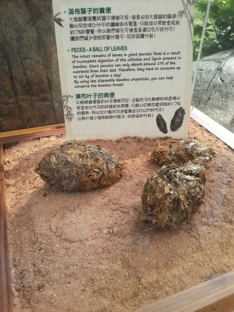 15ocean-park-hong-kong-panda-feces