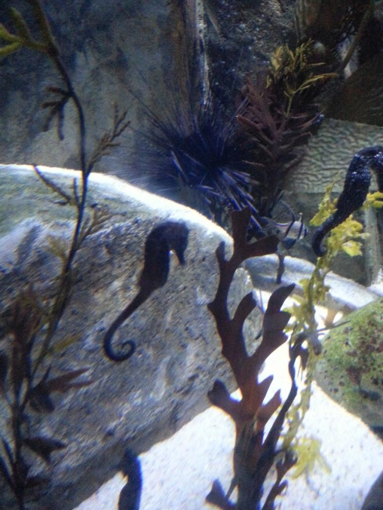7ocean-park-hong-kong-seahorse